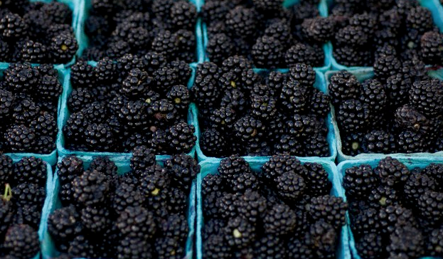 Blackberries inside multiple blue containers
